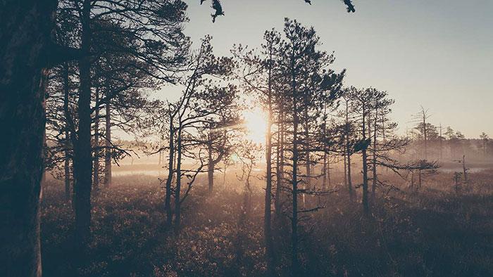Viru Wald Sonnenaufgang