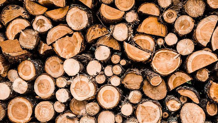 Wandern Impressionen Holz