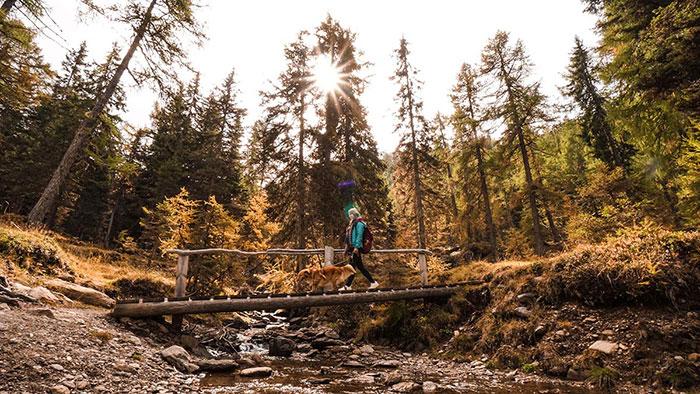 Wandern Impressionen Wald