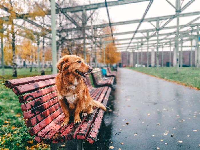 Boris der Hund