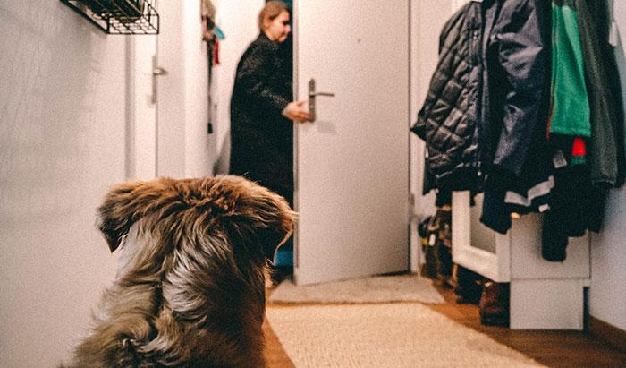 Hund alleine zu Hause
