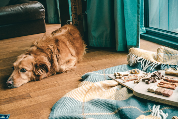 Hund mit Leckerlis
