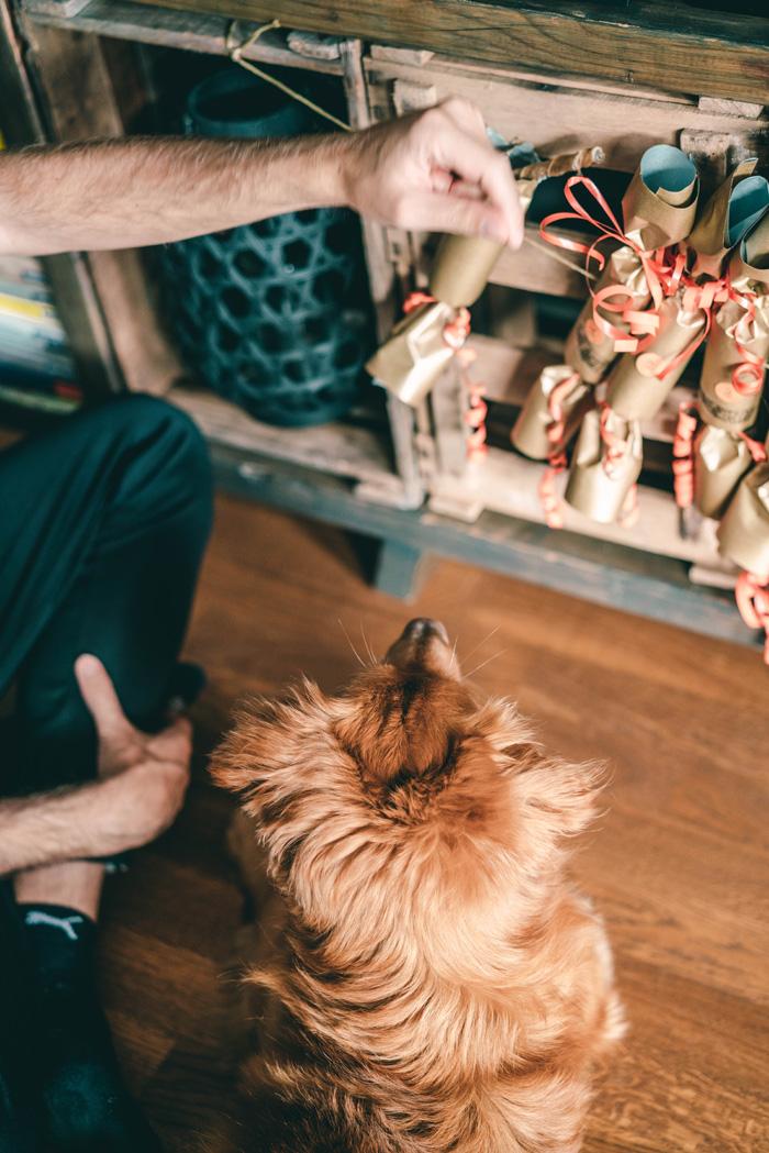 Hund öffnet Adventskalender