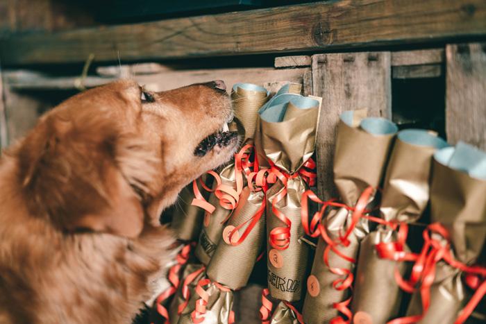 Hund und Adventskalender