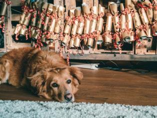 Hunde-Adventskalender