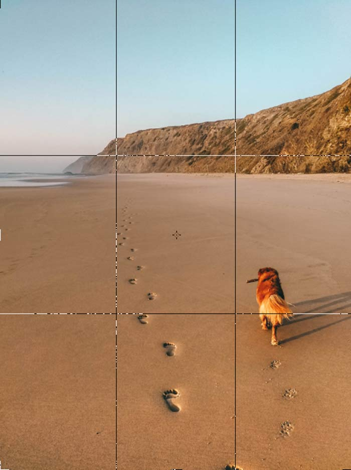 Tricks Hundefotografie