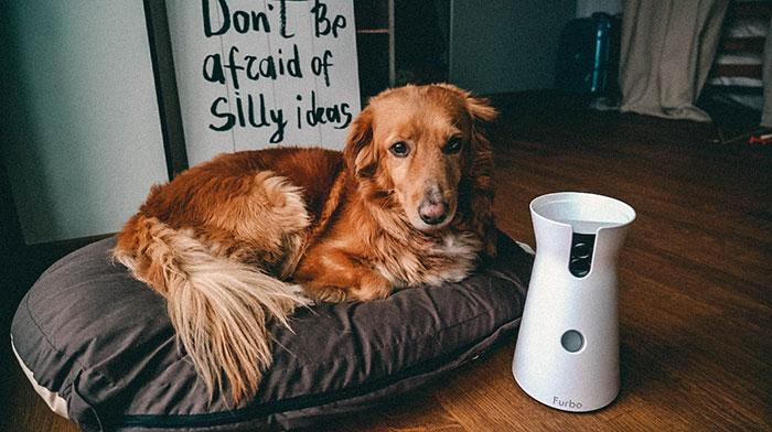 Hundekamera Furbo