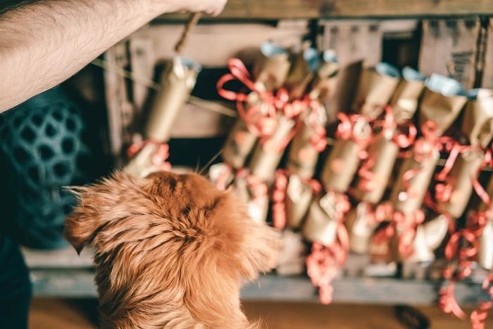 Kalender Advent Hund