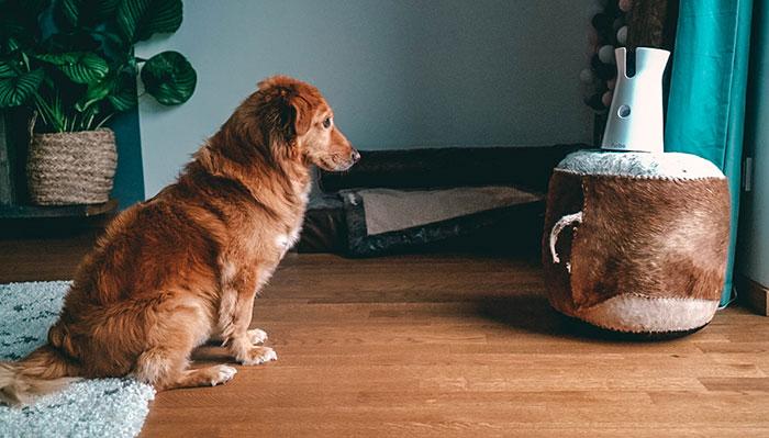 Kamera Hund Furbo