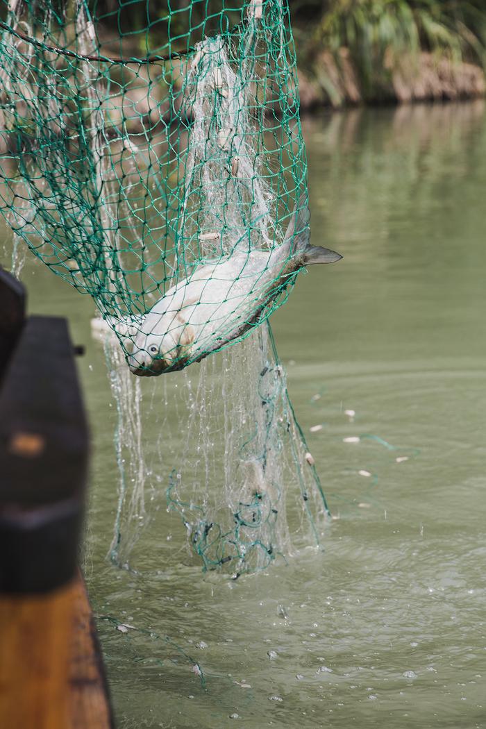 Gefangener Fisch im Feuchtlandpark Xixi
