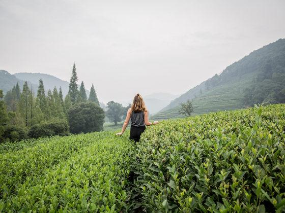 Teeplantage China