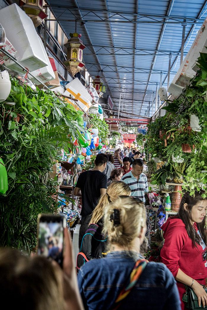 Vogel und Blumenmarkt Shanghai