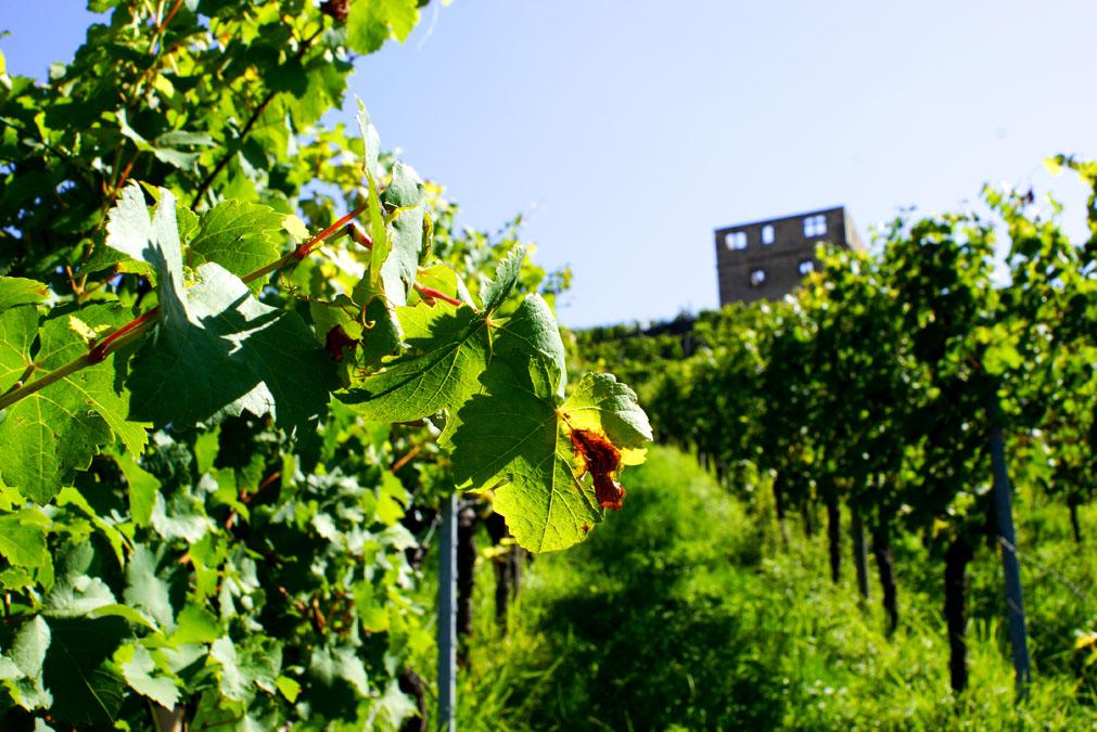 Wochenende in Stuttgart - Y-Burg Weingut Haidle