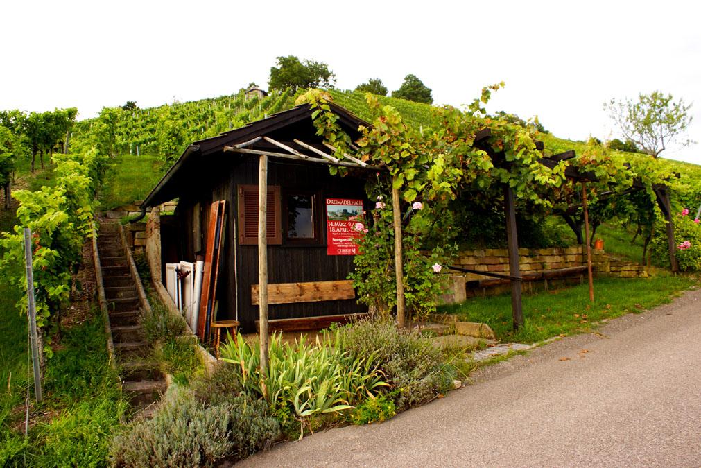 Wochenende in Stuttgart - Weinberge Weingut Currle