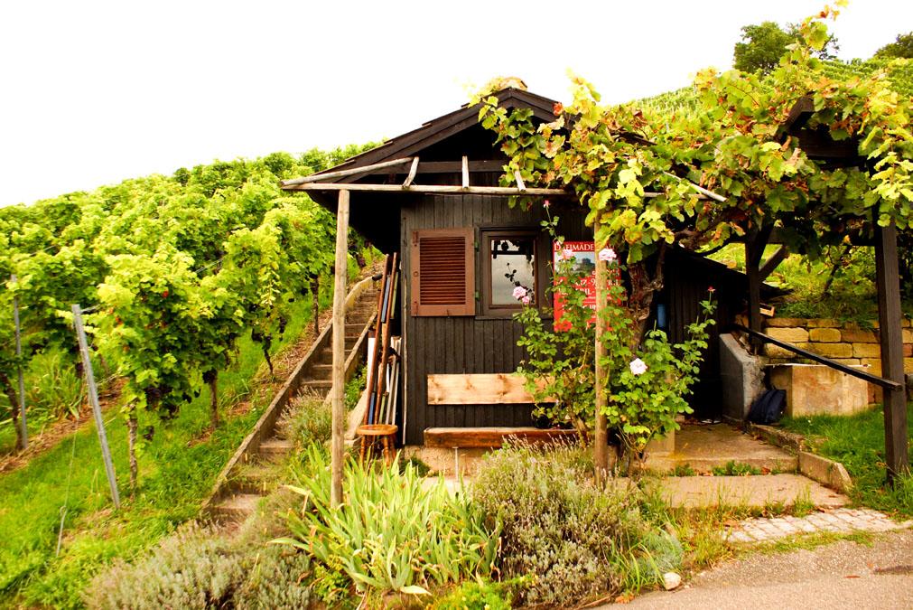 Wochenende in Stuttgart Weinberge Weingut Currle