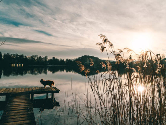 Hund Steg Sonnenuntergang