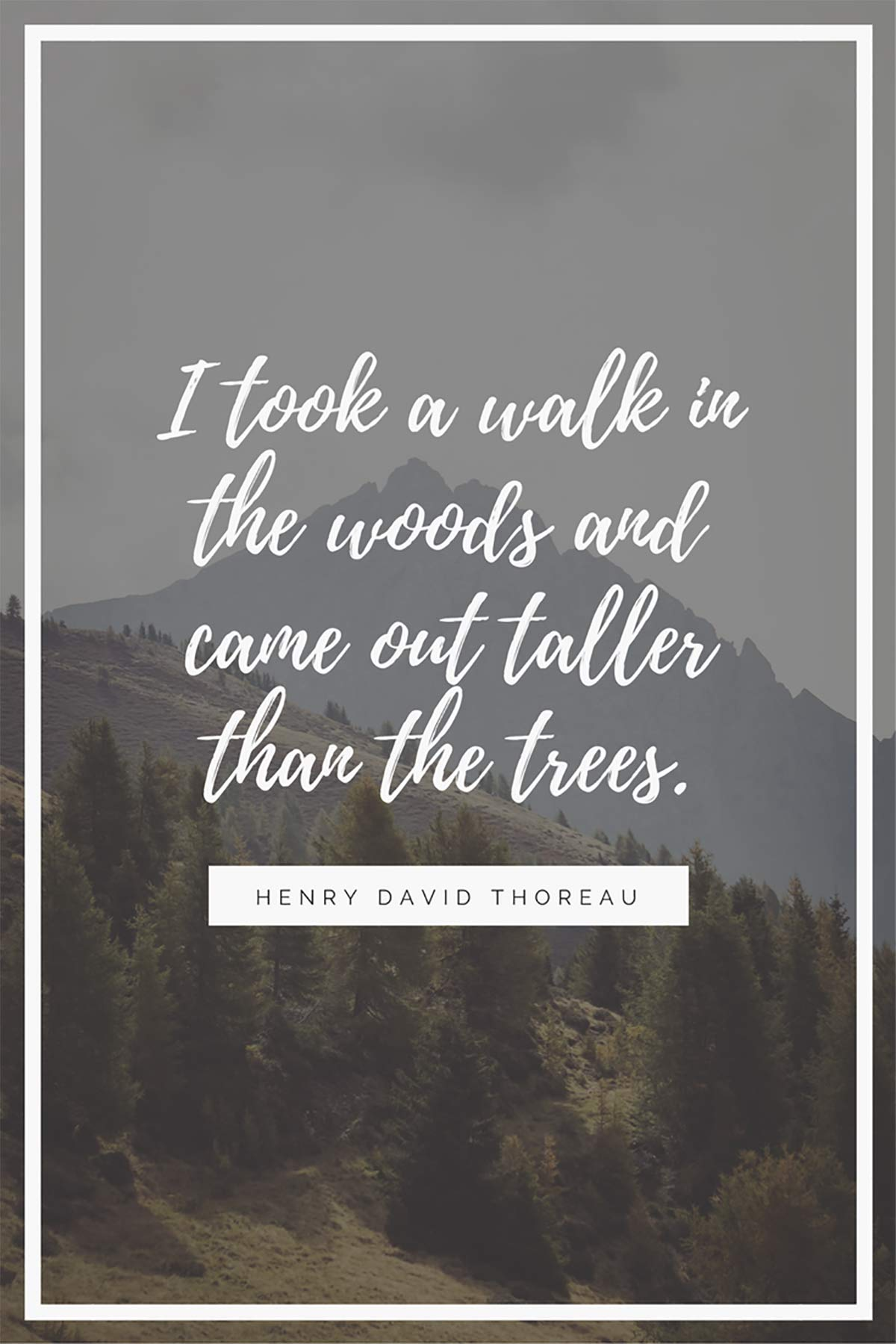 I took a walk in the woods and came out taller than the trees. – Henry David Thoreau
