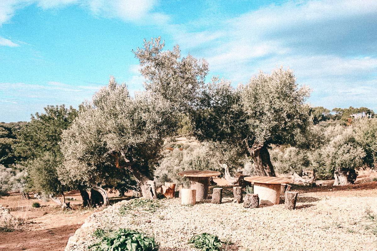 olivenhain mallorca geheimtipps