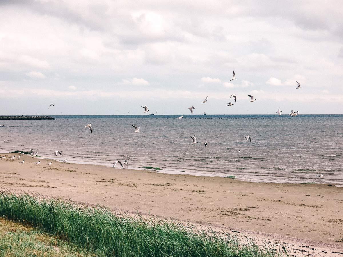 Terschelling Möwen am Strand