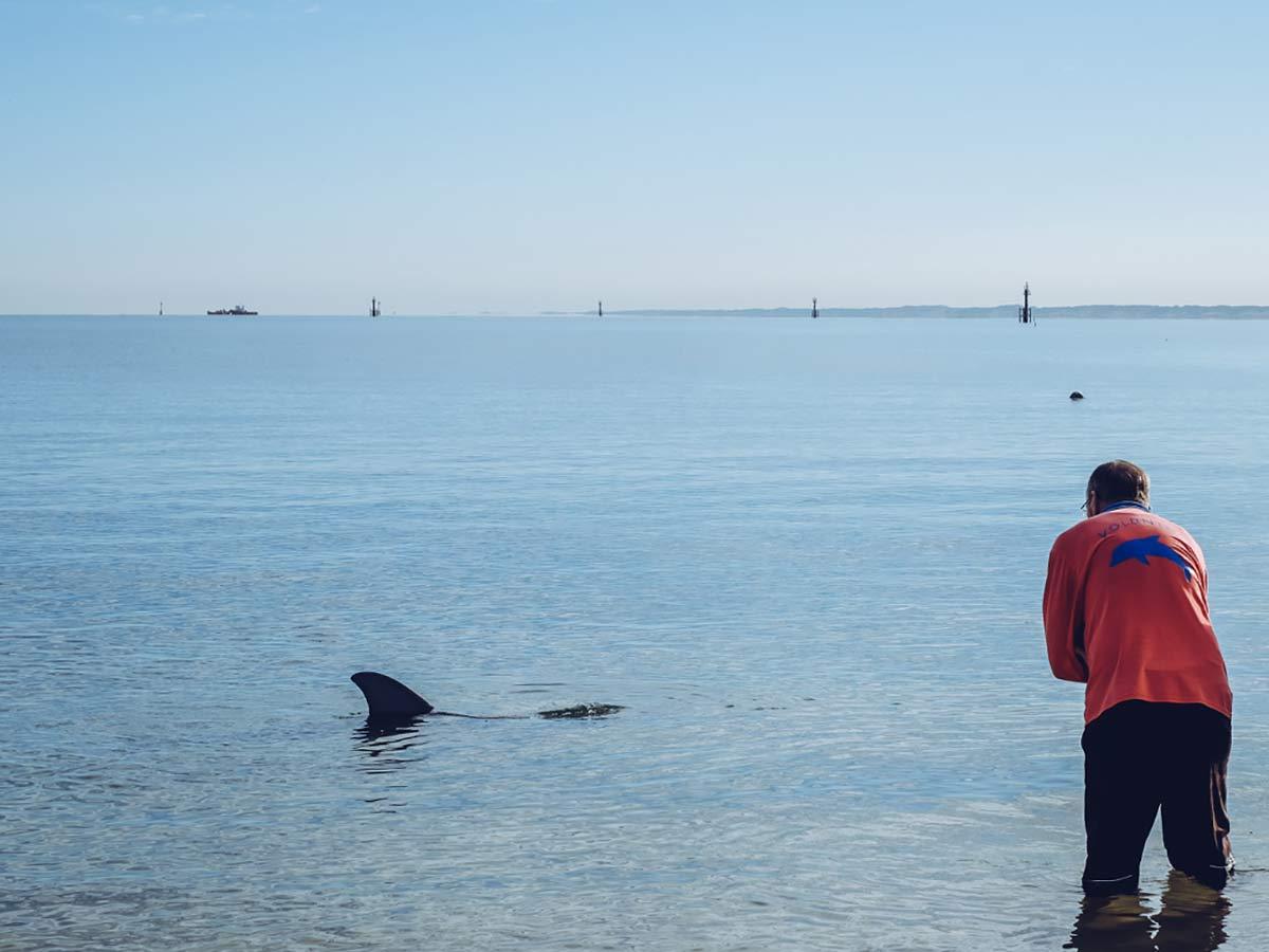 Freiwilligen Dienst Dolphin Discovery Centre