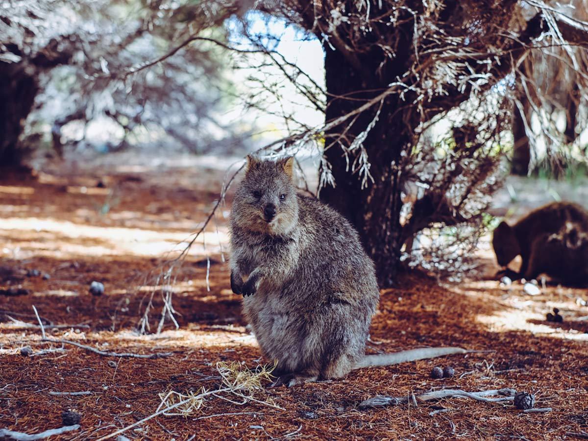 Rottnest Island Westaustralien
