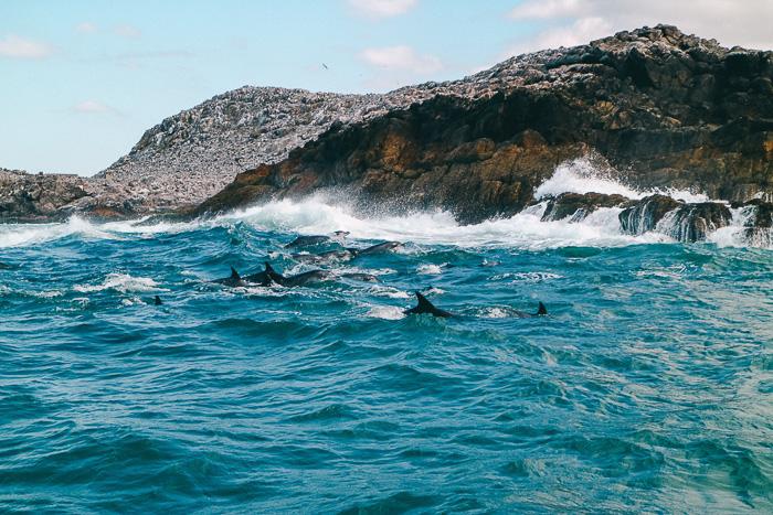 Delfine in Südafrika