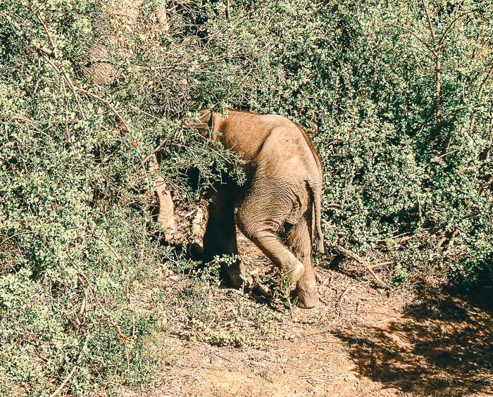 Babyhintern im Addo Elephant Park