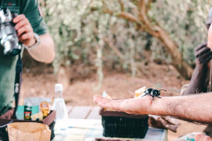 Käfer im Addo Elephant Park