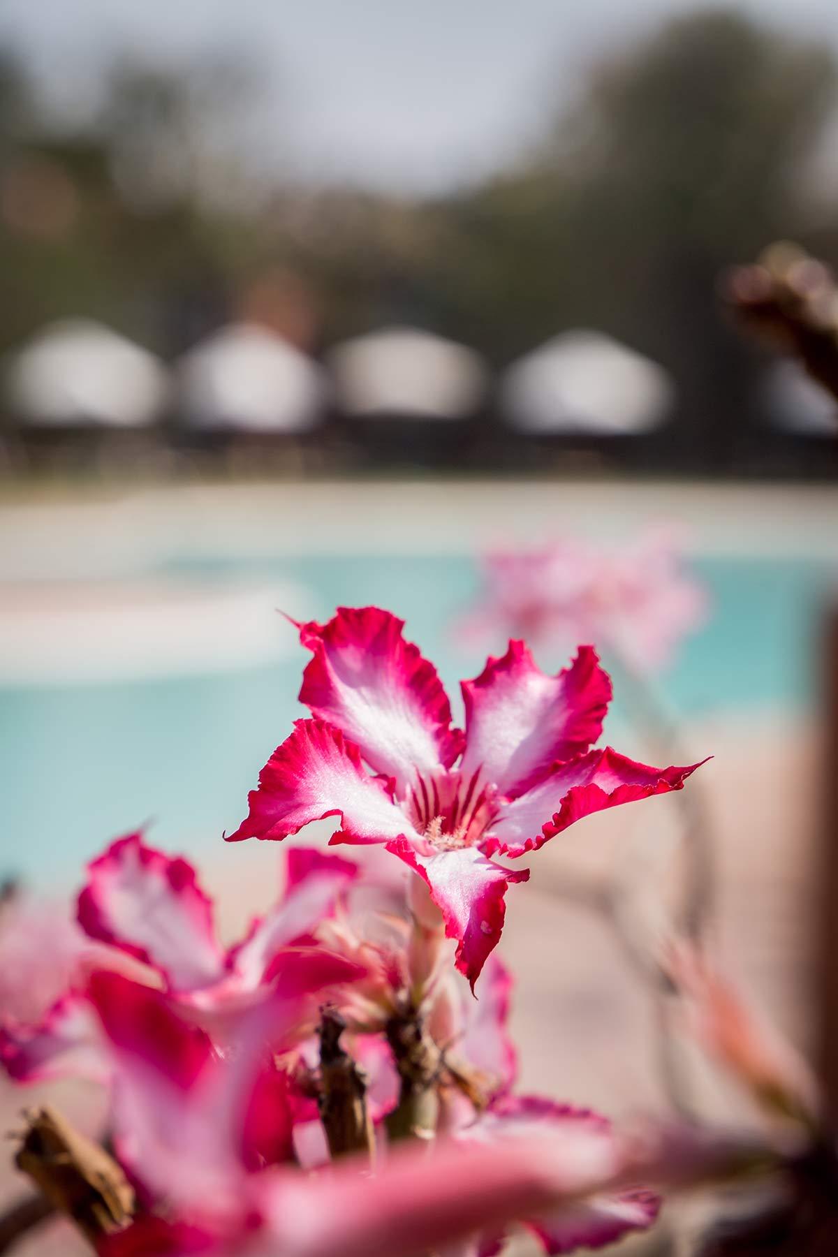 Blume im AVANI Victoria Falls Resort