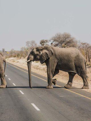 Elefantenherde in Sambia