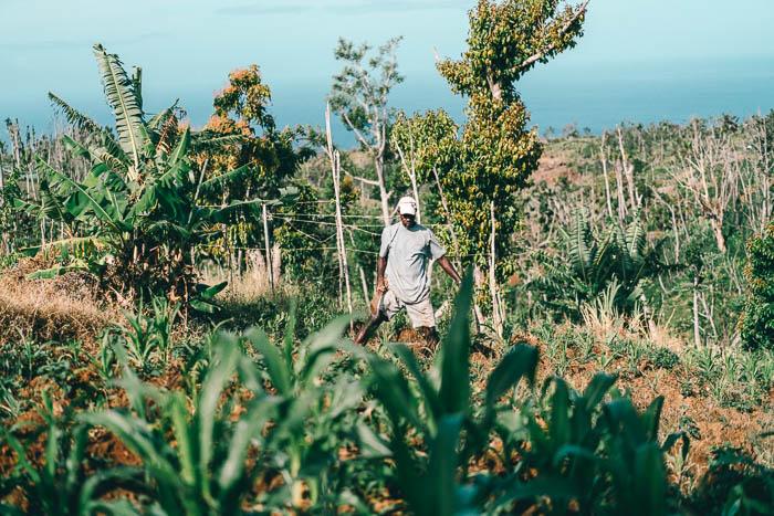 Farm Dominica