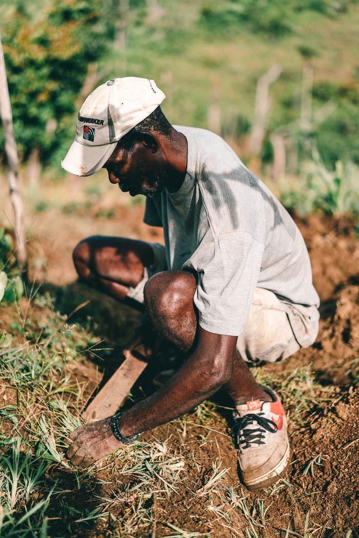 Farmer Dominica