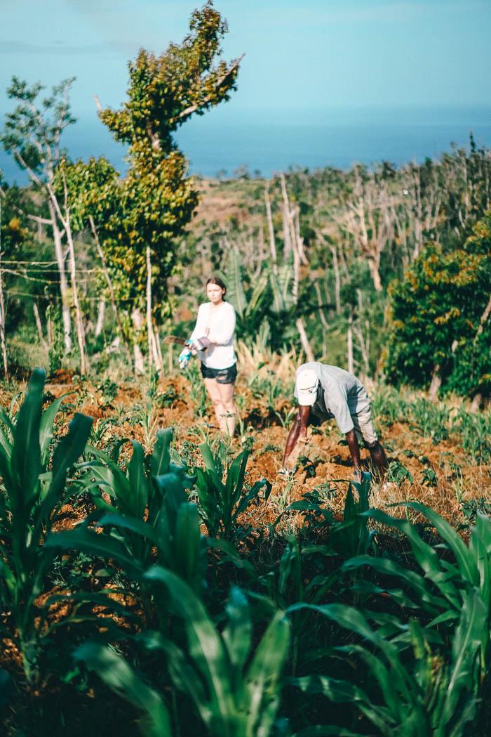 Farming Dominica