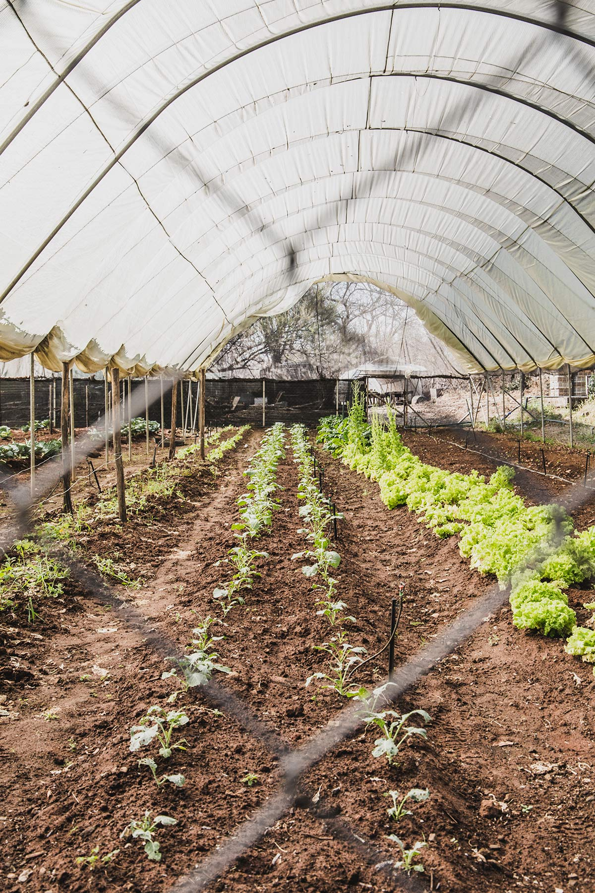 Garten des Royal Livingstone