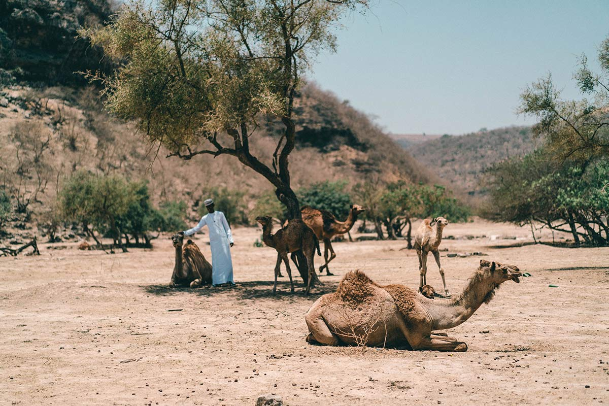 Kamelherde Oman
