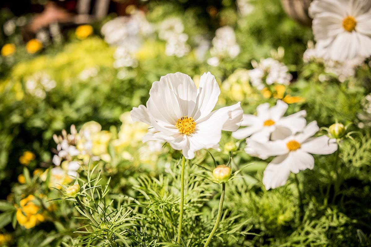 Cafe Augenwaide Blumen