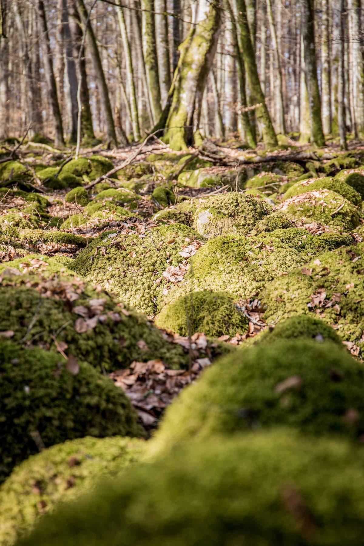 Nationalpark Asnen Südschweden