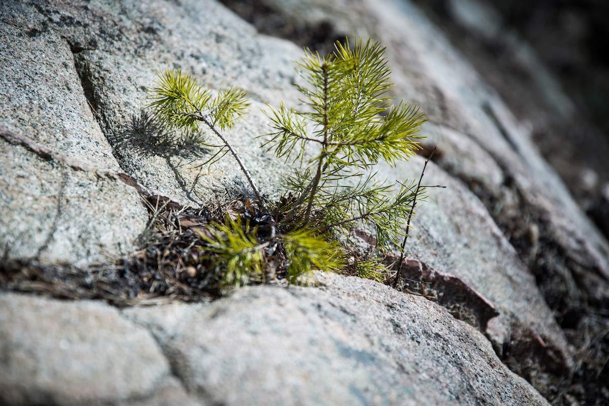 Natur pur Schweden