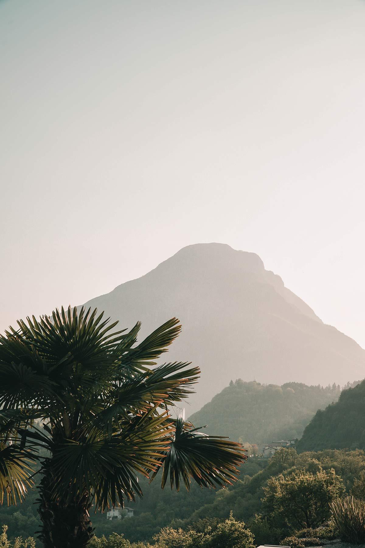 Palme Gardasee