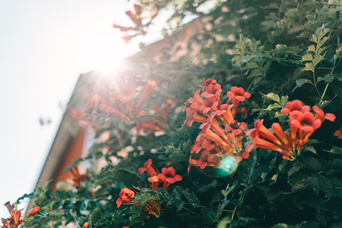 Blumen Brandenburg