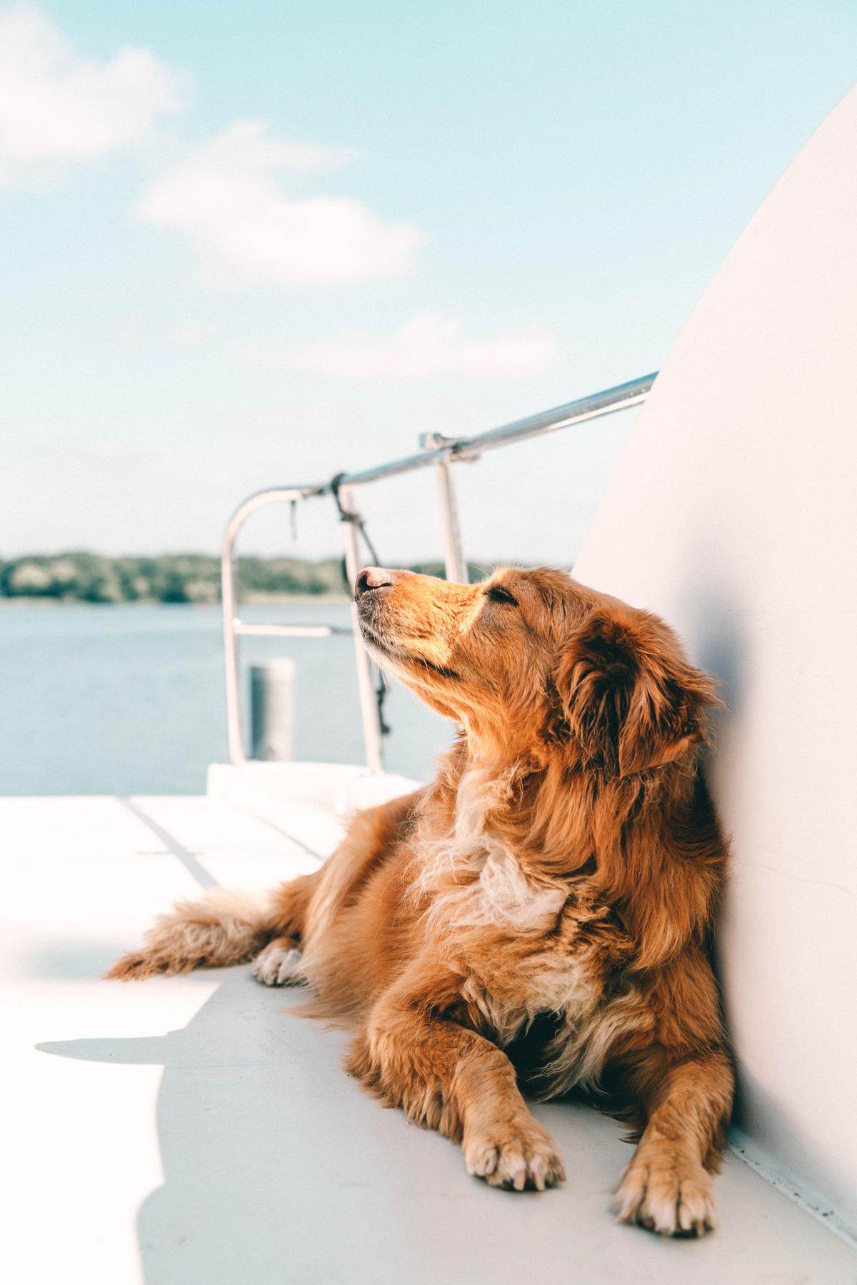 Boris auf dem Hausboot