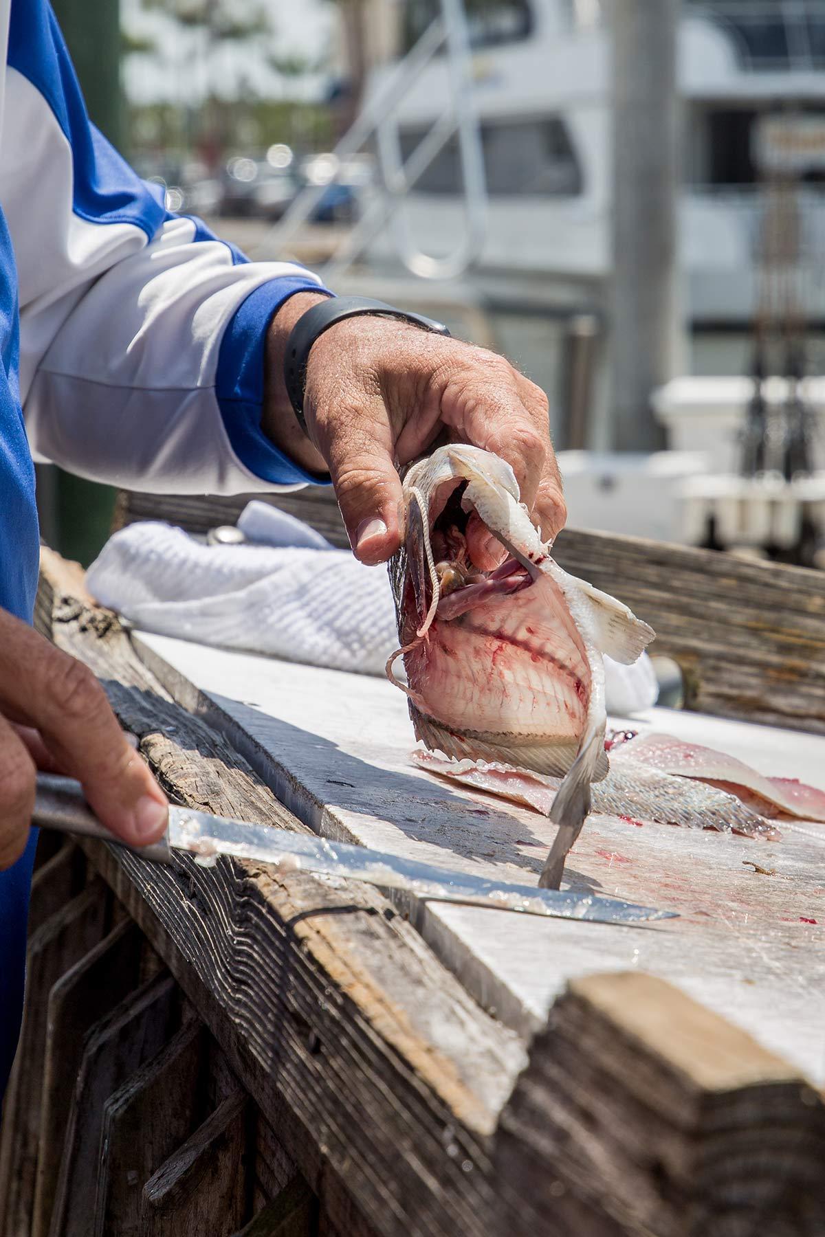 Frischer Fisch am Dock Tin City Naples