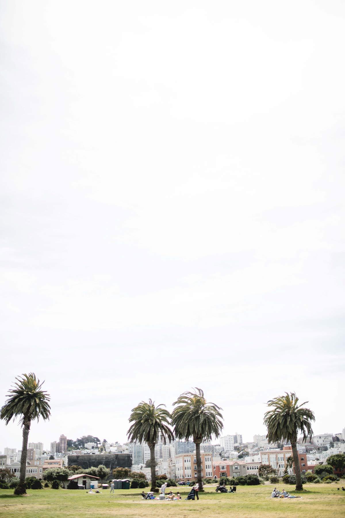 Palmen in San Francisco