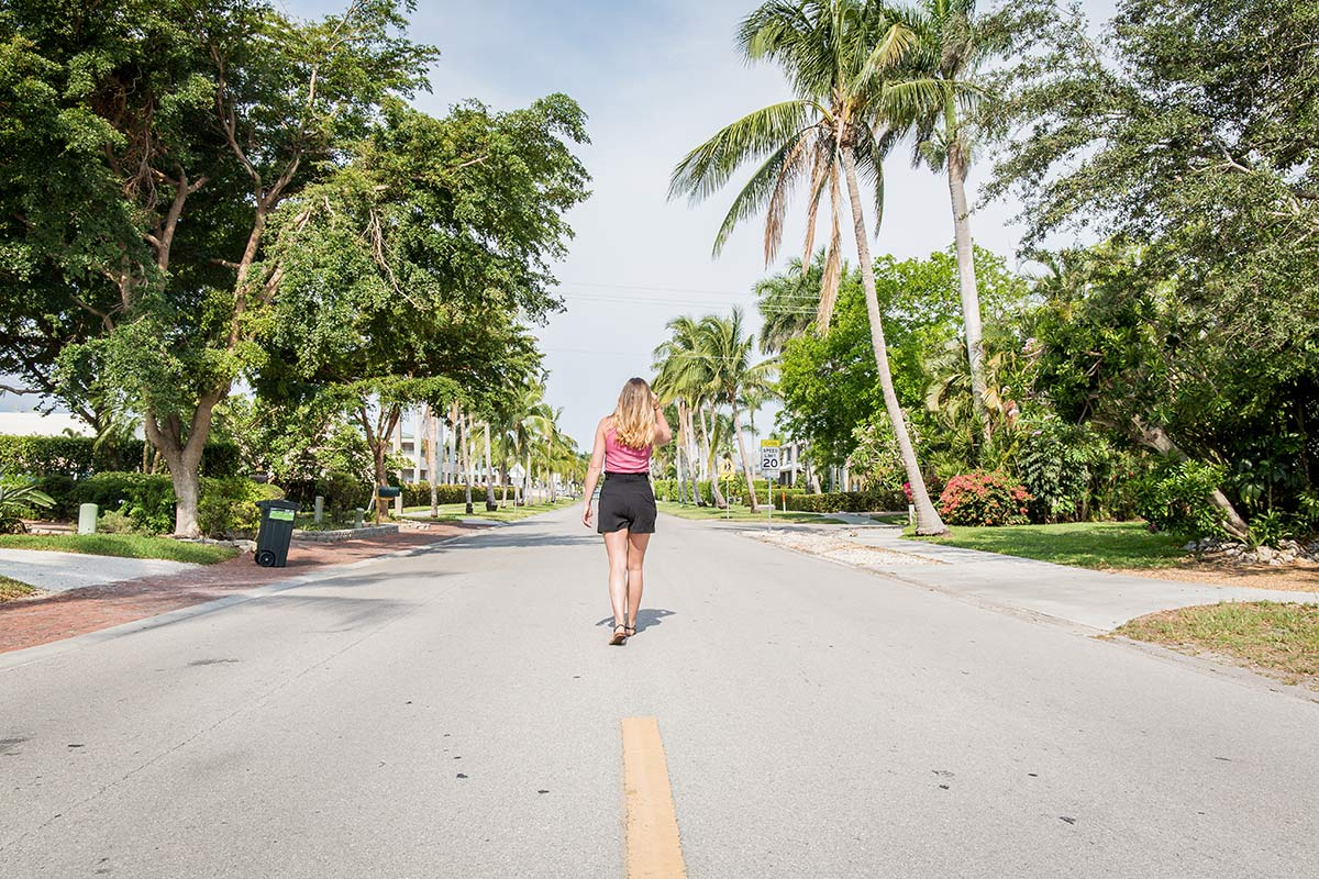 Palmenallee in Naples, Florida
