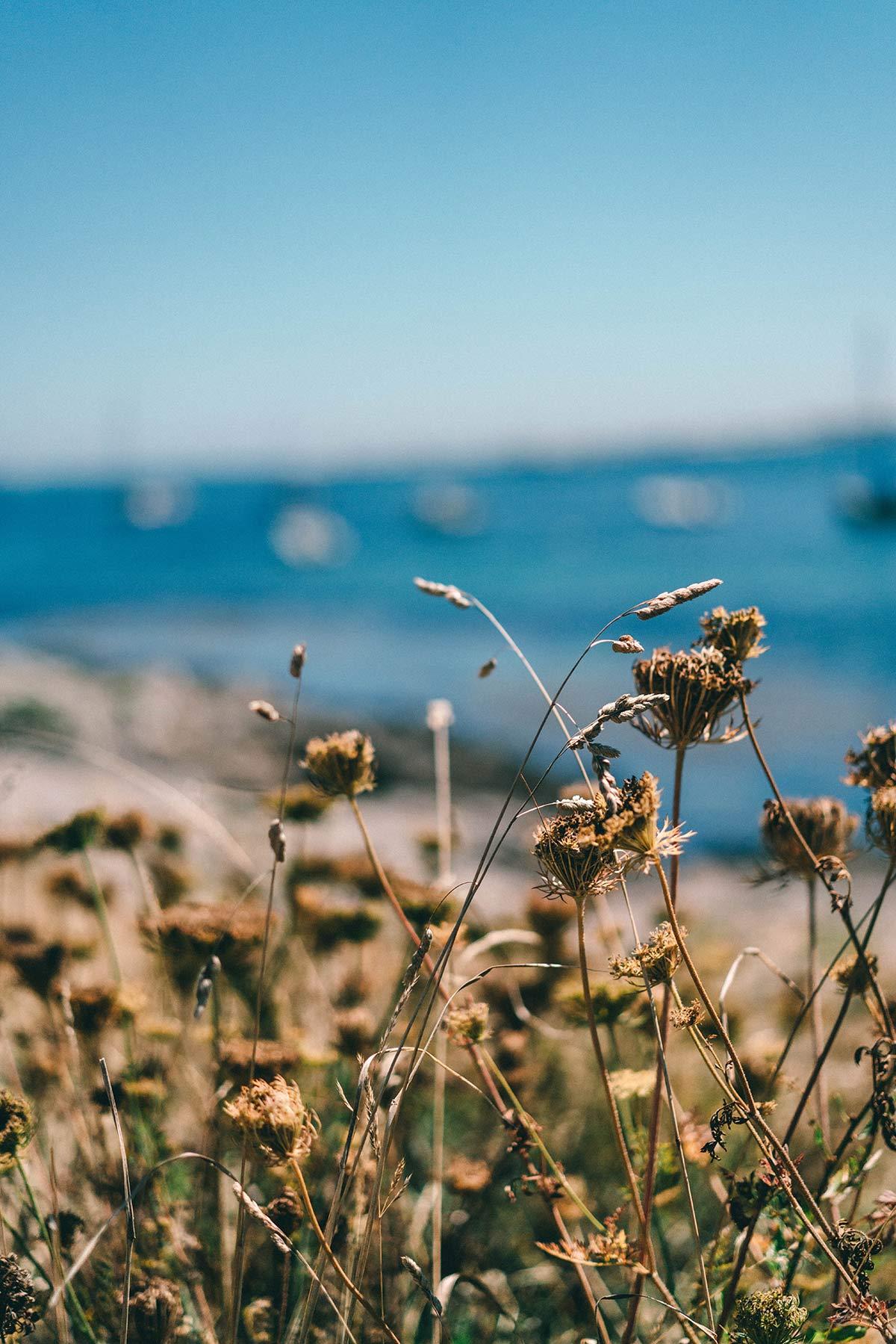 Blumenpracht der Glènan Inseln