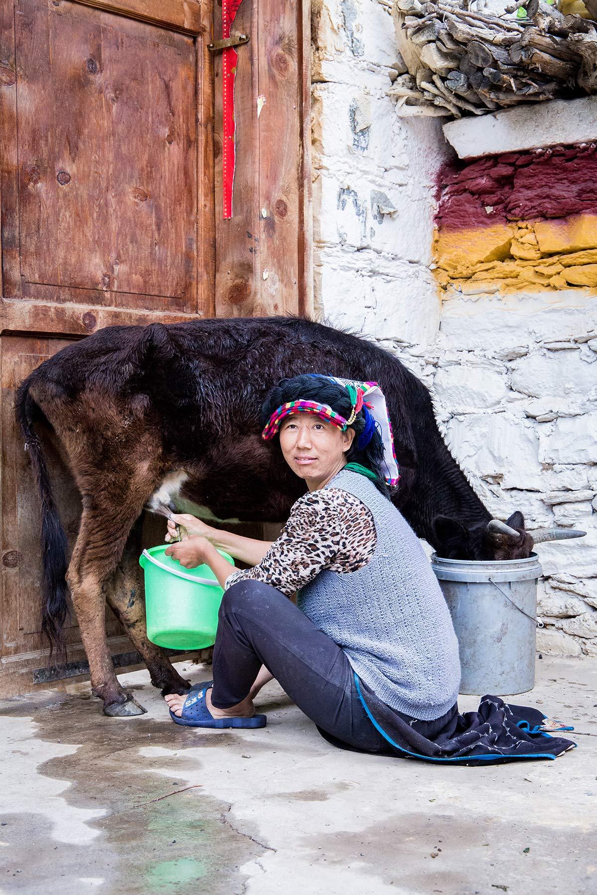 Eine Yi melkt ihre Kuh im Danba Tal