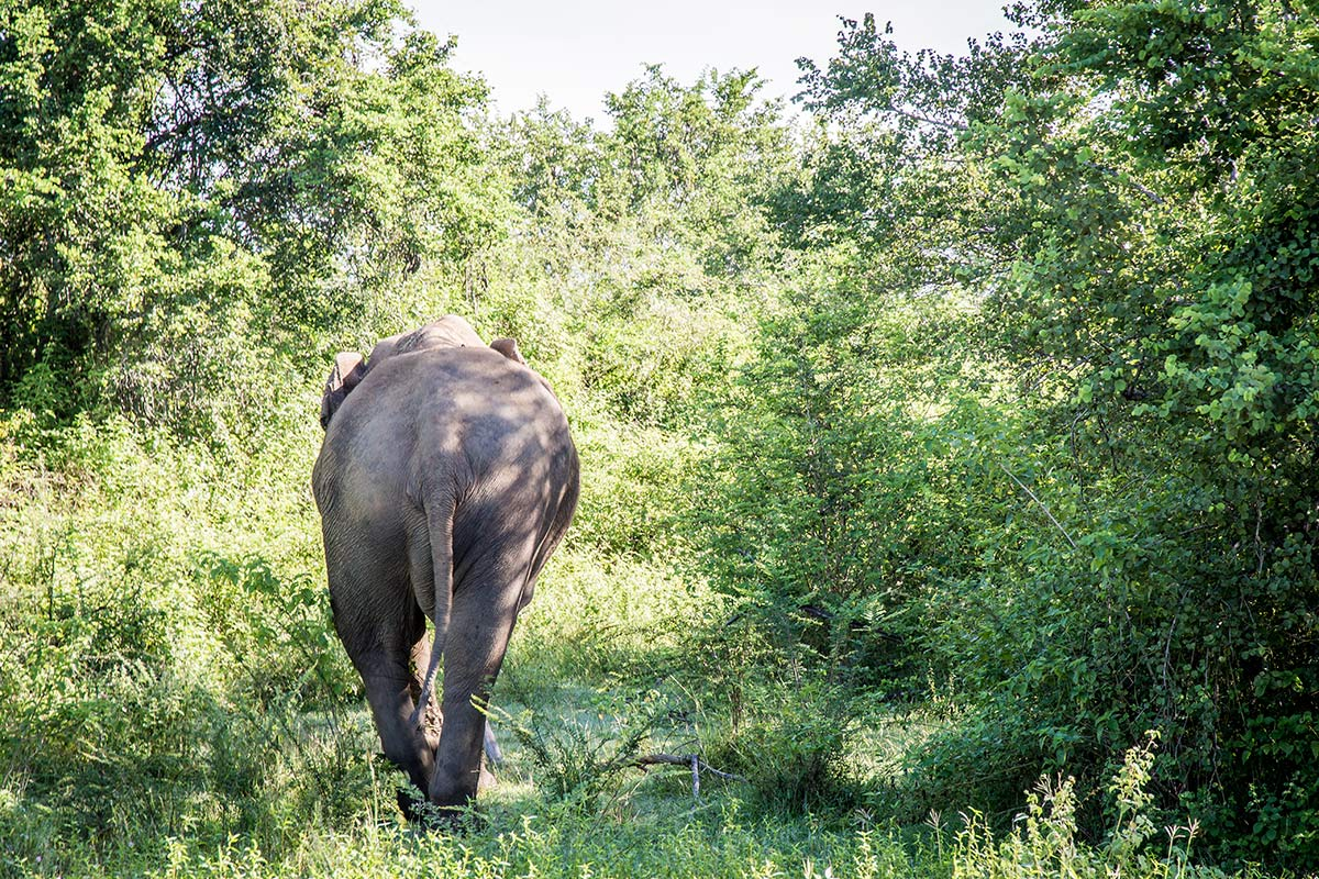 Elefant im Udawalawe National Park