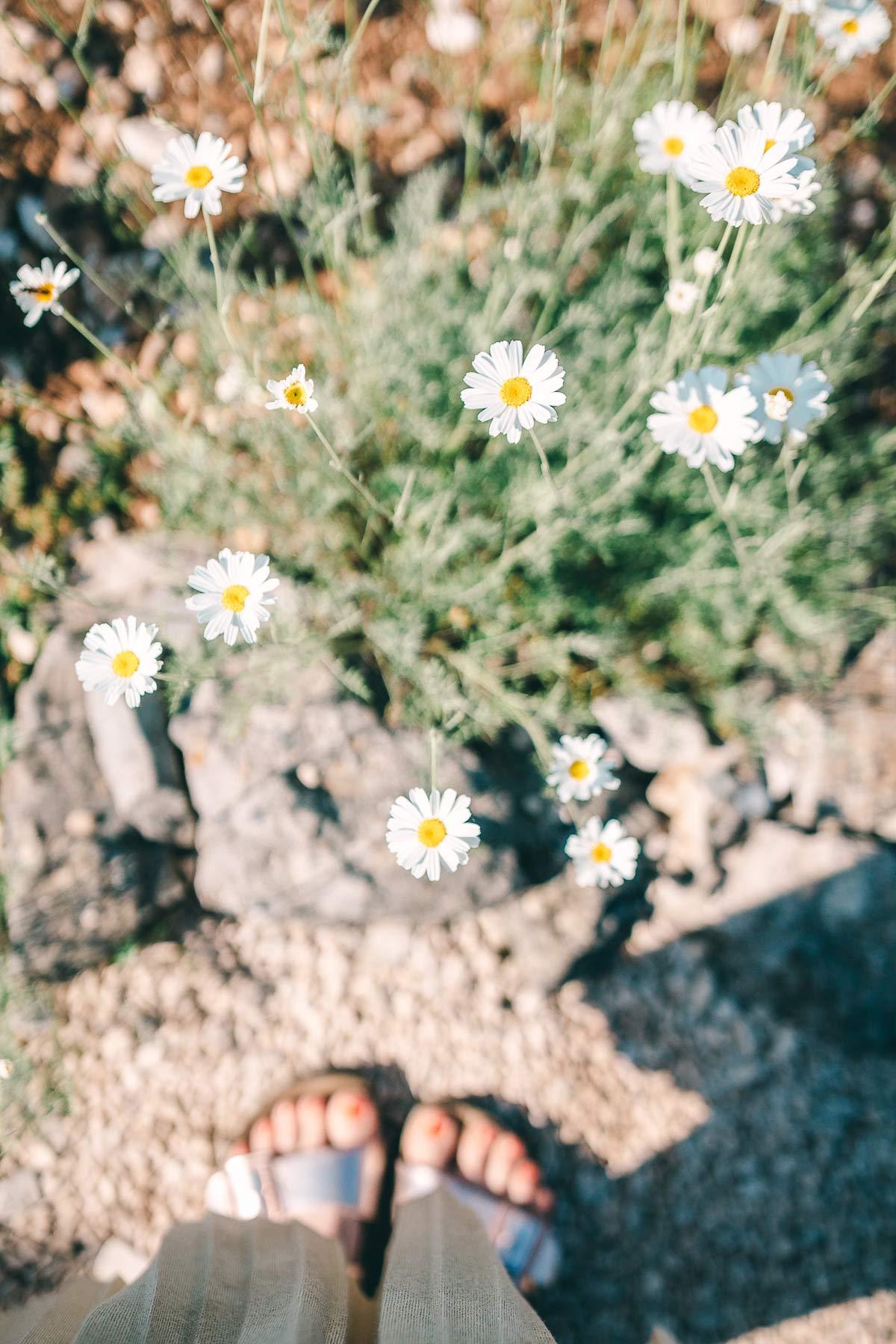 Im Kräutergarten wachsen unzählige Blumen und Kräuter