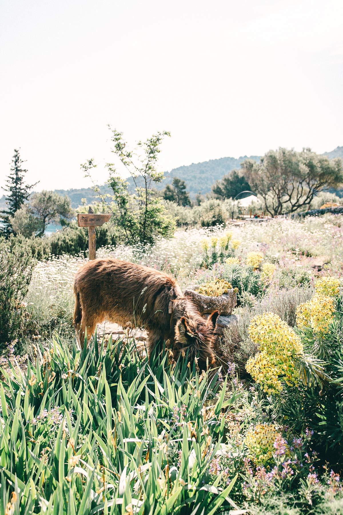 Esel Kroatien