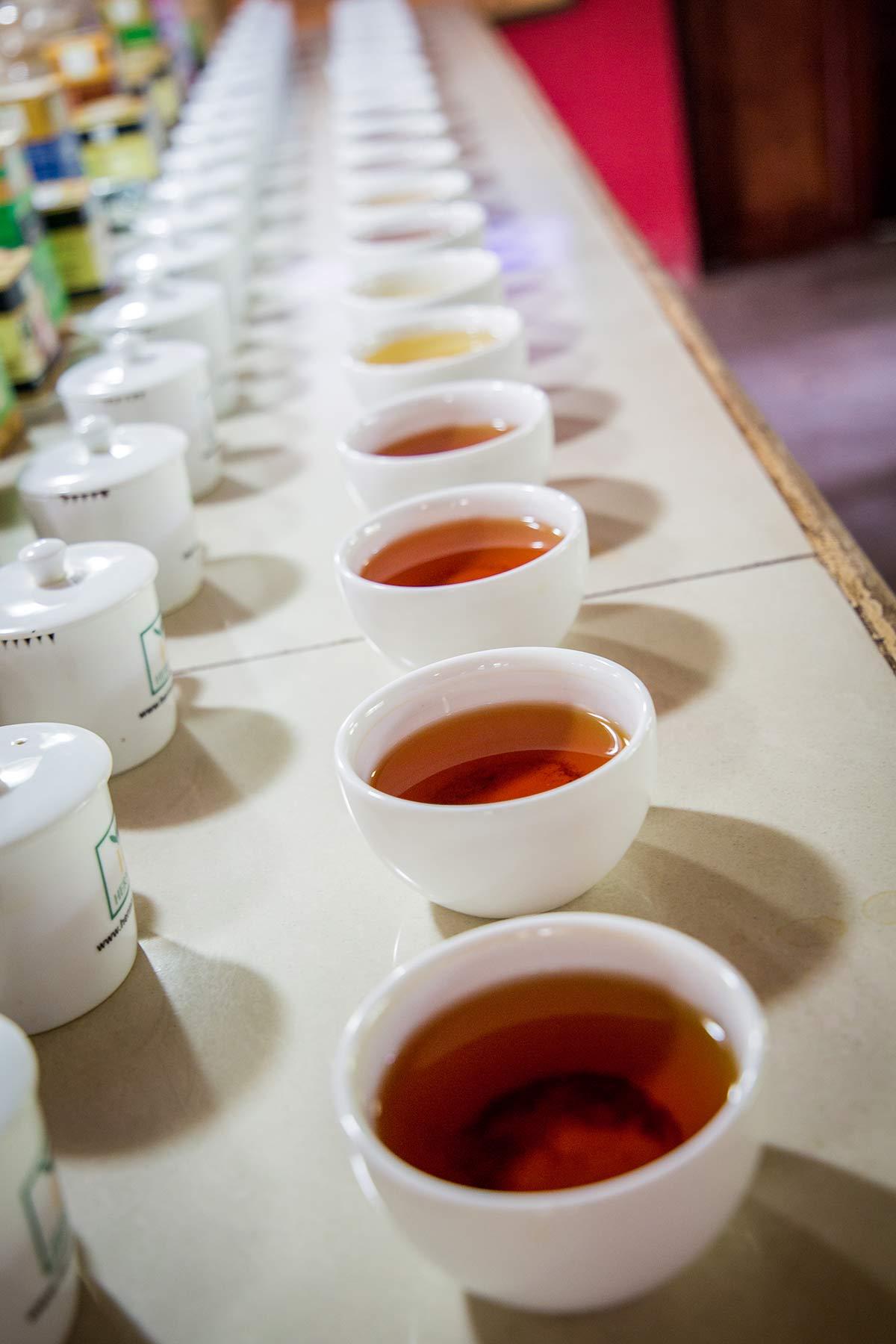 Teeverkostung im Handunugoda Tea Estate